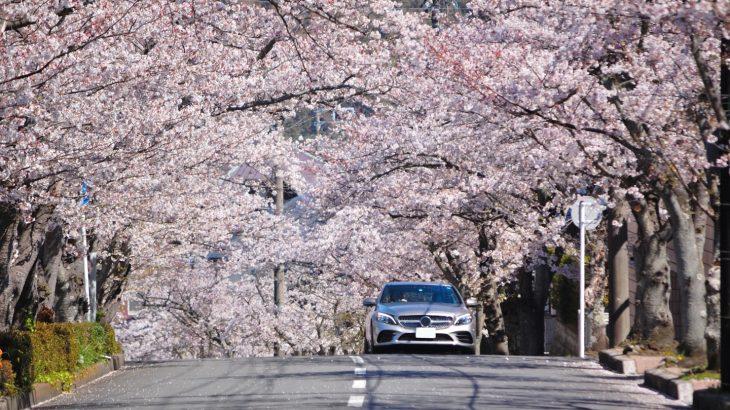 【逗子移住】逗子ハイランドの住み心地 良いところ悪いところ【桜並木】